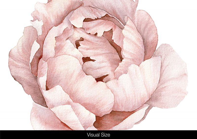 Classic-Pink-Peony-&-Rose-Wall-Decals-